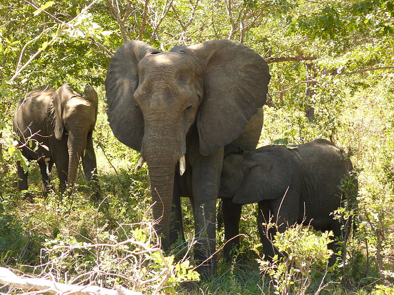 Botswana Safari Holidays Elephants