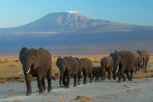 Tanzania Wildlife Safaris Mount Kilimanjaro