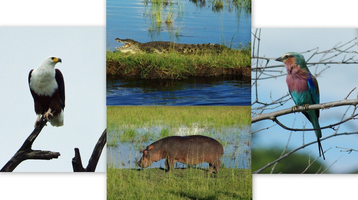 Wildlife of the Okavango Delta