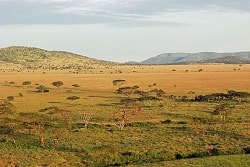 Tanzania Safari Review View of the Serengeti Park