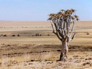 Tree in the Namibian Desert