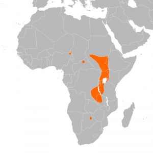 Distribution Map of the Shoebill in Africa