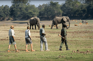 Walking Safari in Africa Tourists in the South Luangwa Park